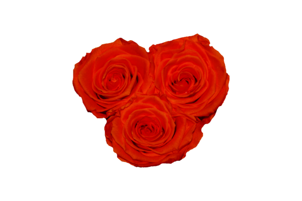 Rosenbox HEART 3 (Weiß) - 3 Infinity Rosen (Orange)